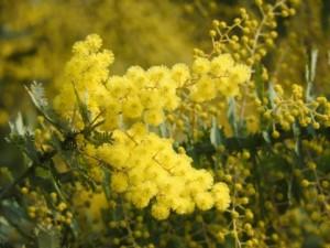 flower160321