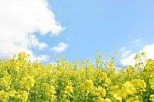 flower160423