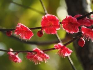 flower160402-2