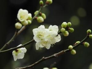flower160402