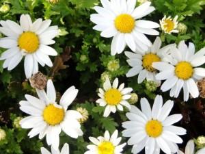 flower160404