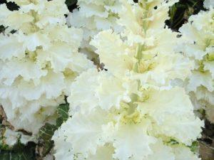 flower160416