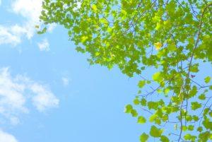 leaf160429