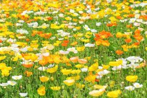 flower160524