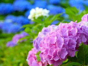 flower160516-2