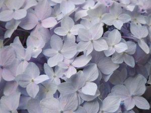 flower160514