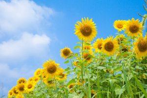 flower160516-1