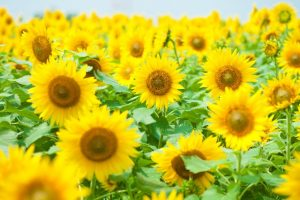 flower160628