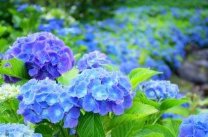 flower160602
