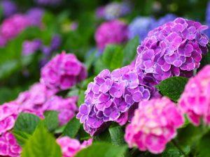 flower160604
