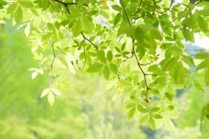 leaf160612
