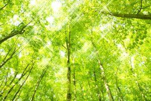 tree160629