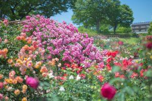flower160724-2