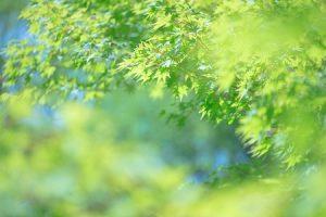 leaf160727