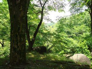 tree160710