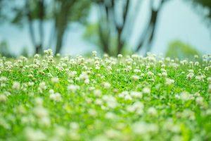 flower160803