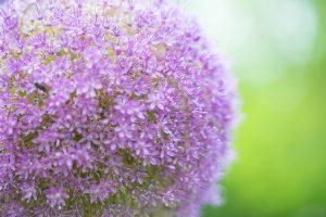 flower160806