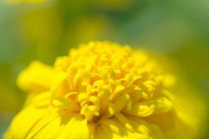 flower160819