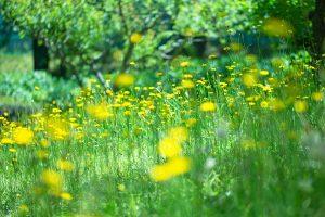 flower160911