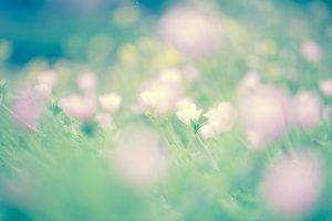 flower160924