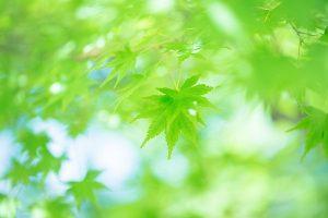 leaf161005