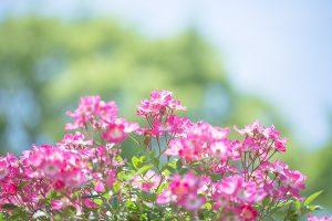 flower161001