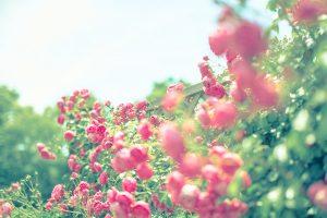 flower161008