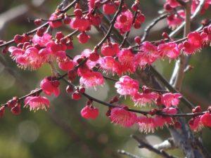 flower161016